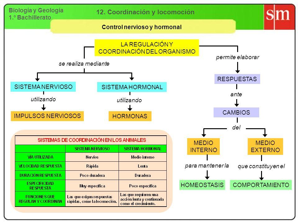 Biología y Geología 1.º Bachillerato 12. Coordinación y locomoción Control nervioso y hormonal LA REGULACIÓN Y COORDINACIÓN DEL ORGANISMO SISTEMA NERV
