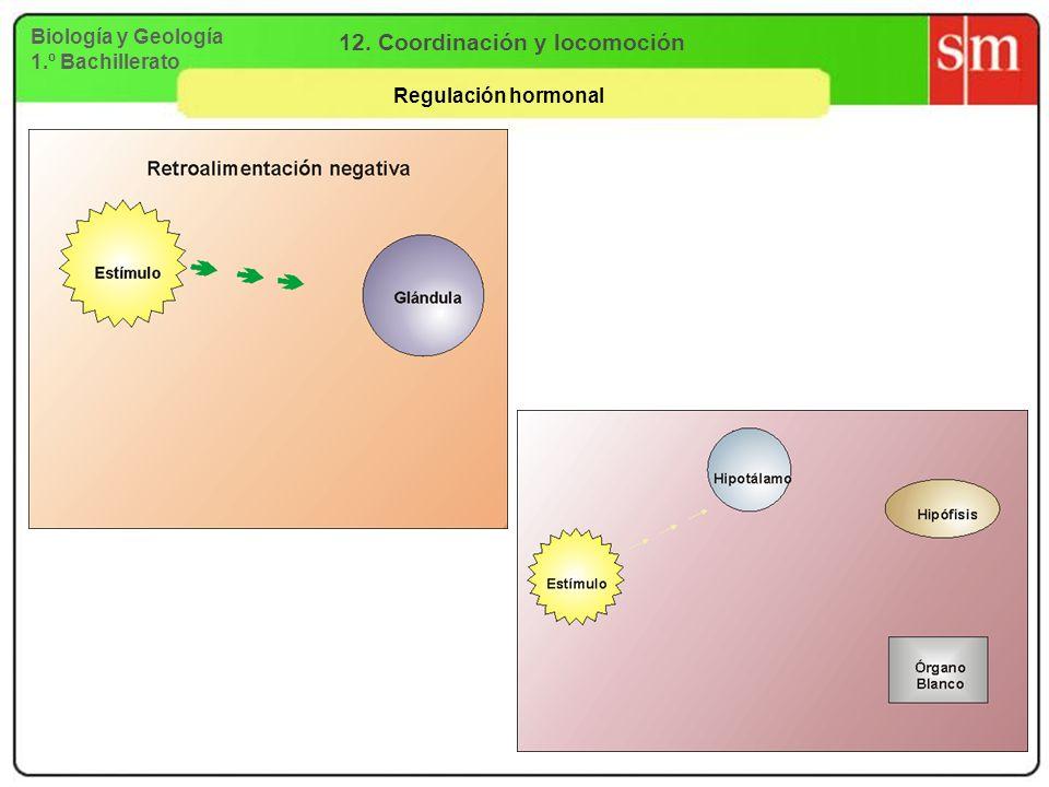 Biología y Geología 1.º Bachillerato 12. Coordinación y locomoción Regulación hormonal