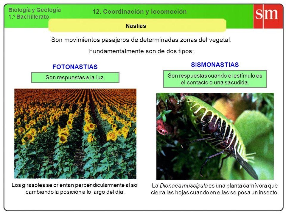 Biología y Geología 1.º Bachillerato 12. Coordinación y locomoción Nastias La Dionaea muscipula es una planta carnívora que cierra las hojas cuando en