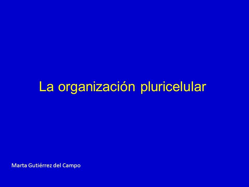 MODELOS DE ORGANIZACIÓN EN VEGETALES Y ANIMALES VEGETALES 1.RAÍZ 3. HOJAS 2.TALLO