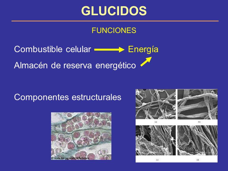GLUCIDOS FUNCIONES Combustible celular Energía Almacén de reserva energético Componentes estructurales