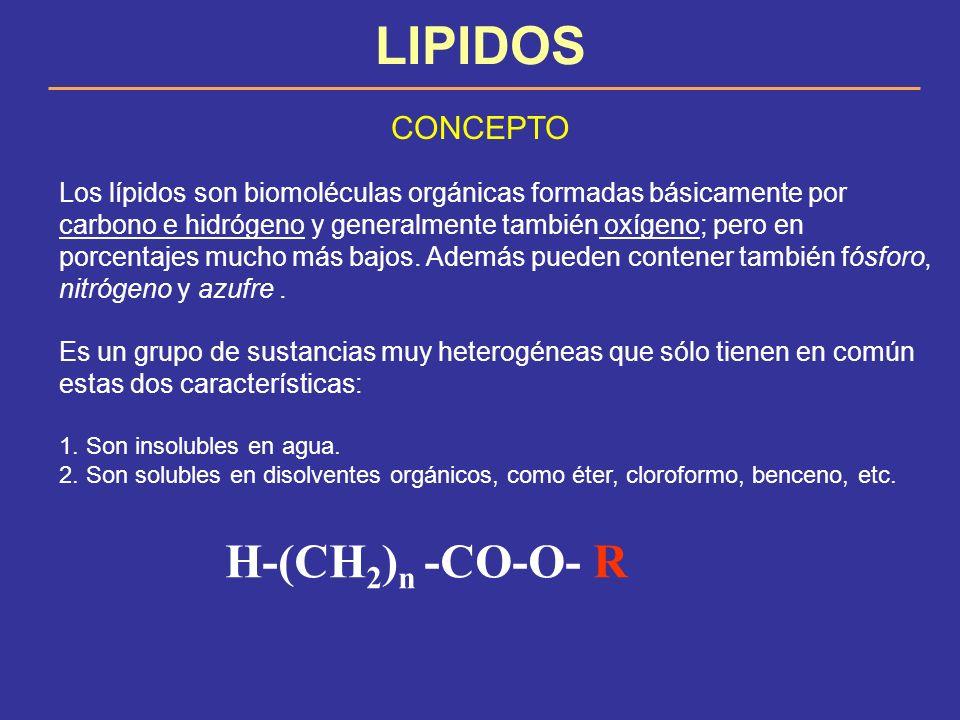 LIPIDOS CONCEPTO Los lípidos son biomoléculas orgánicas formadas básicamente por carbono e hidrógeno y generalmente también oxígeno; pero en porcentaj