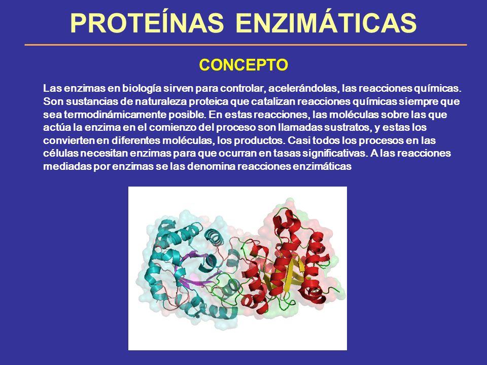 PROTEÍNAS ENZIMÁTICAS CONCEPTO Las enzimas en biología sirven para controlar, acelerándolas, las reacciones químicas. Son sustancias de naturaleza pro