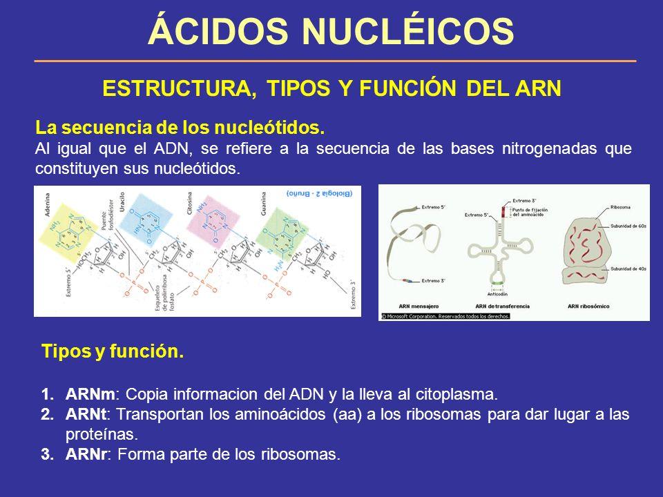 ÁCIDOS NUCLÉICOS ESTRUCTURA, TIPOS Y FUNCIÓN DEL ARN La secuencia de los nucleótidos. Al igual que el ADN, se refiere a la secuencia de las bases nitr