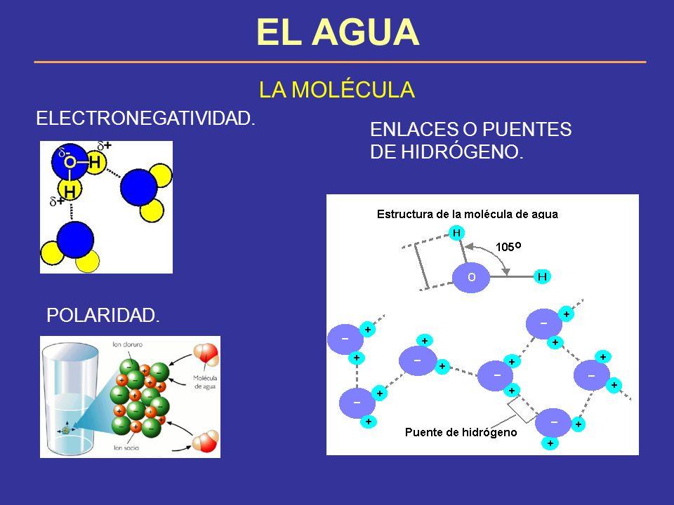 EL AGUA IMPORTANCIA BIOLÓGICA DEL AGUA 1.Es el principal disolvente biológico.