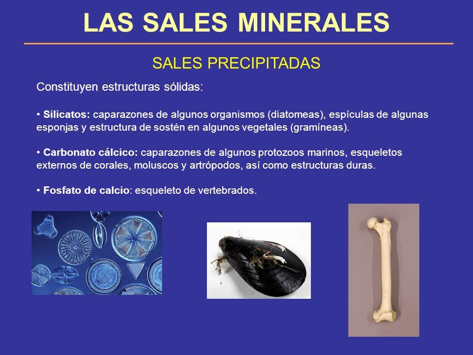 LAS SALES MINERALES SALES PRECIPITADAS Constituyen estructuras sólidas: Silicatos: caparazones de algunos organismos (diatomeas), espículas de algunas
