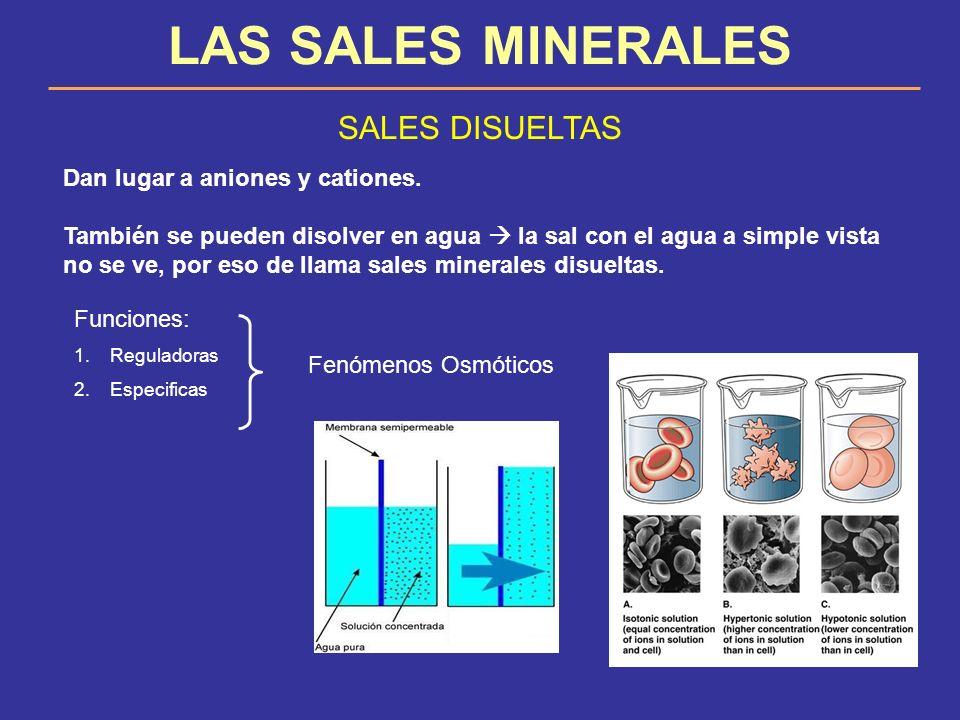 LAS SALES MINERALES SALES DISUELTAS Dan lugar a aniones y cationes. También se pueden disolver en agua la sal con el agua a simple vista no se ve, por