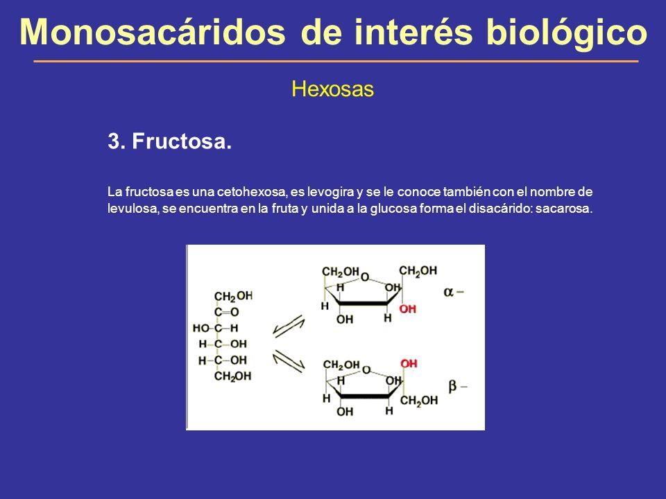 Monosacáridos de interés biológico Hexosas 3. Fructosa. La fructosa es una cetohexosa, es levogira y se le conoce también con el nombre de levulosa, s