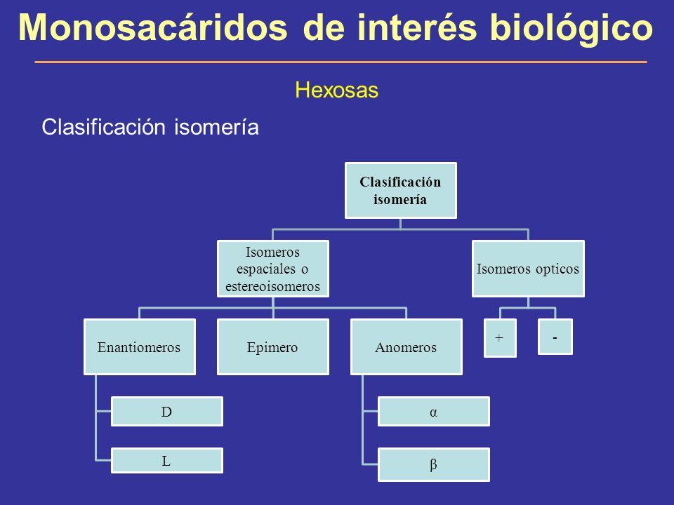 Monosacáridos de interés biológico Hexosas Clasificación isomería Isomeros espaciales o estereoisomeros Enantiomeros D L EpimeroAnomeros α β Isomeros