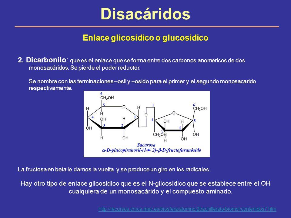 Disacáridos Enlace glicosidico o glucosidico 2. Dicarbonilo: que es el enlace que se forma entre dos carbonos anomericos de dos monosacáridos. Se pier