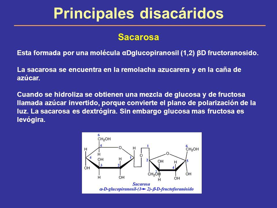 Principales disacáridos Sacarosa Esta formada por una molécula αDglucopiranosil (1,2) βD fructoranosido. La sacarosa se encuentra en la remolacha azuc