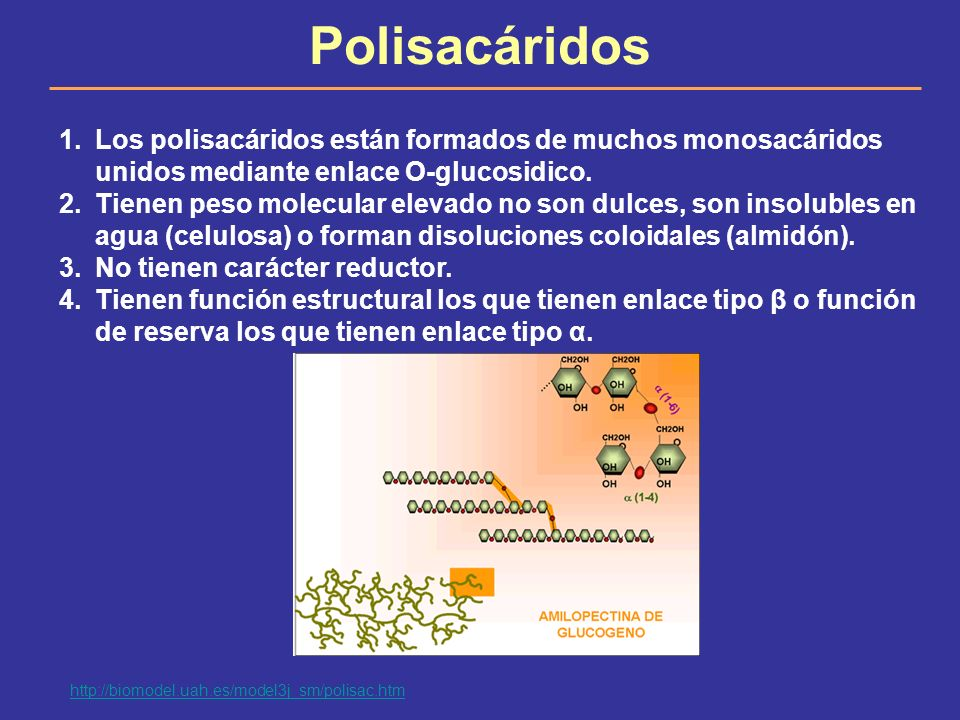 Polisacáridos 1.Los polisacáridos están formados de muchos monosacáridos unidos mediante enlace O-glucosidico. 2.Tienen peso molecular elevado no son