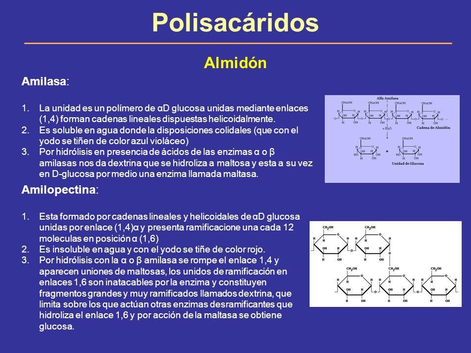 Polisacáridos Almidón Amilasa: 1.La unidad es un polímero de αD glucosa unidas mediante enlaces (1,4) forman cadenas lineales dispuestas helicoidalmen