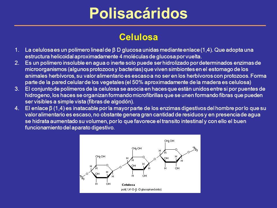 Polisacáridos Celulosa 1.La celulosa es un polímero lineal de β D glucosa unidas mediante enlace (1,4). Que adopta una estructura helicoidal aproximad