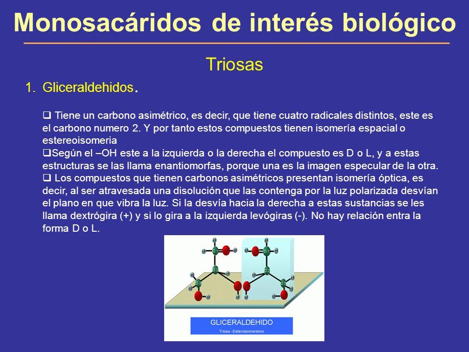 Monosacáridos de interés biológico Triosas 1.Gliceraldehidos. Tiene un carbono asimétrico, es decir, que tiene cuatro radicales distintos, este es el