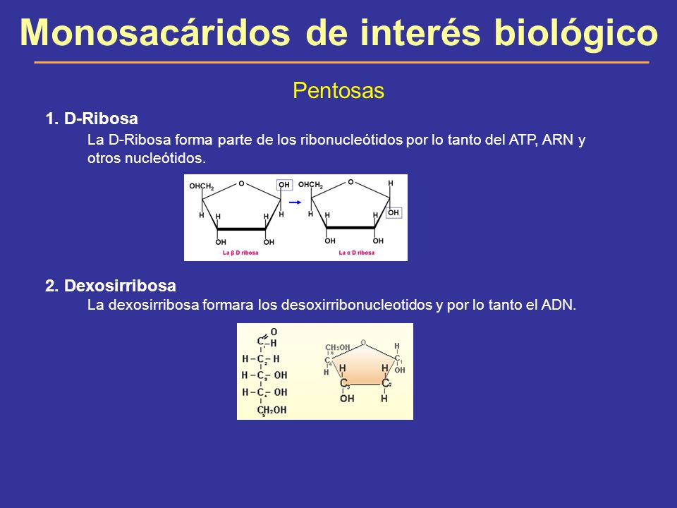 Monosacáridos de interés biológico Pentosas 3.