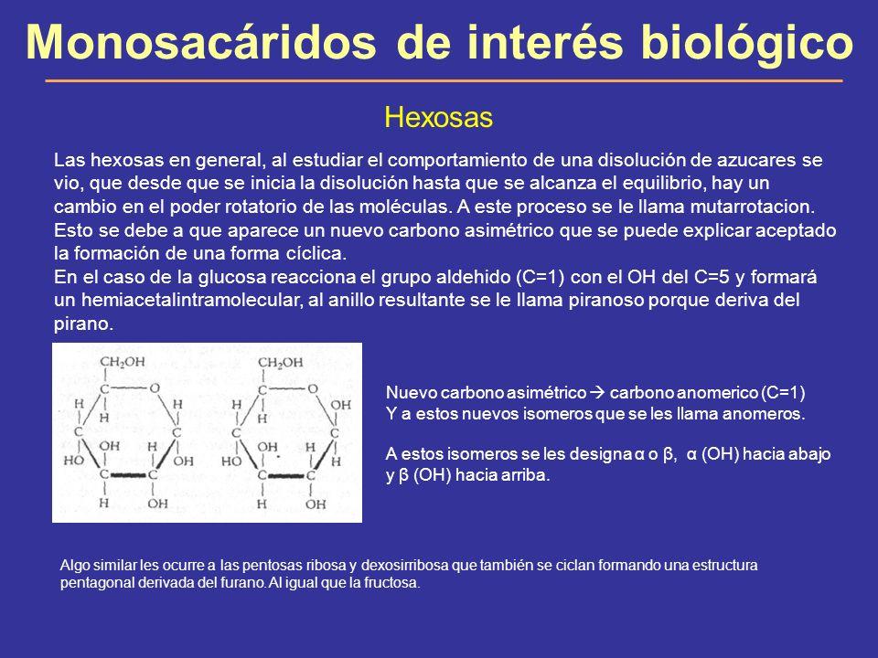 Monosacáridos de interés biológico Hexosas Las hexosas en general, al estudiar el comportamiento de una disolución de azucares se vio, que desde que s