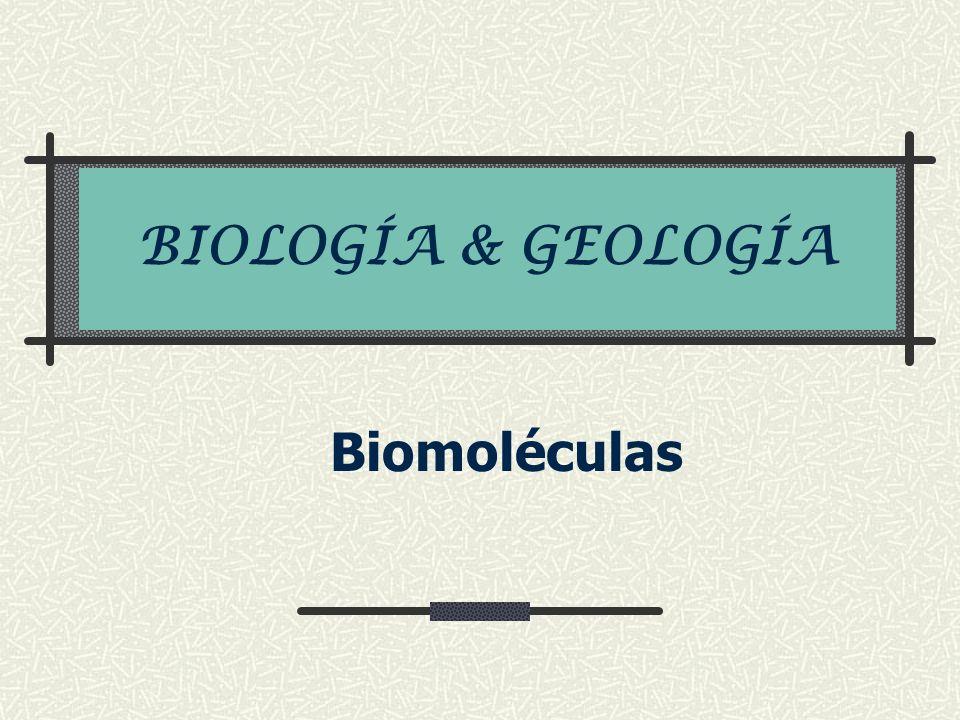 Glucolípidos Receptora de Moléculas externas Cara externa Neuronas Bicapa lípidica Membrana celular Ácido graso, un alcohol, glúcido o azúcar Reconocimiento celular