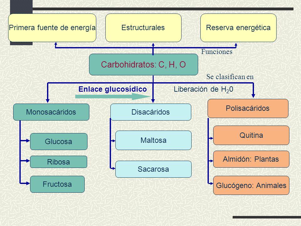 LÍPIDOS Enlace Covalente no polar C, H, O Hidrofóbicos Insolubles en agua Ácido GrasoGlicerol Cadena hidrocarbonada Grupo carboxilo - COOH 3 Grupos - OH +