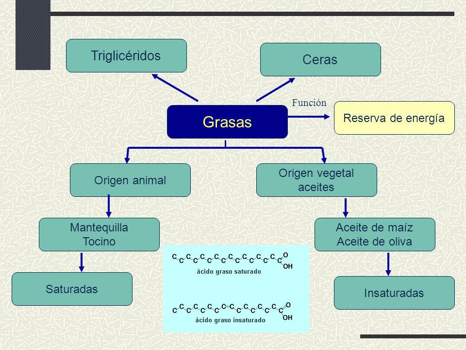 Según el número de ácidos grasos, se distinguen tres tipos de estos lípidos Monoglicéridos, que contienen una molécula de ácido graso Diglicéridos, con dos moléculas de ácidos grasos Triglicéridos, con tres moléculas de ácidos grasos