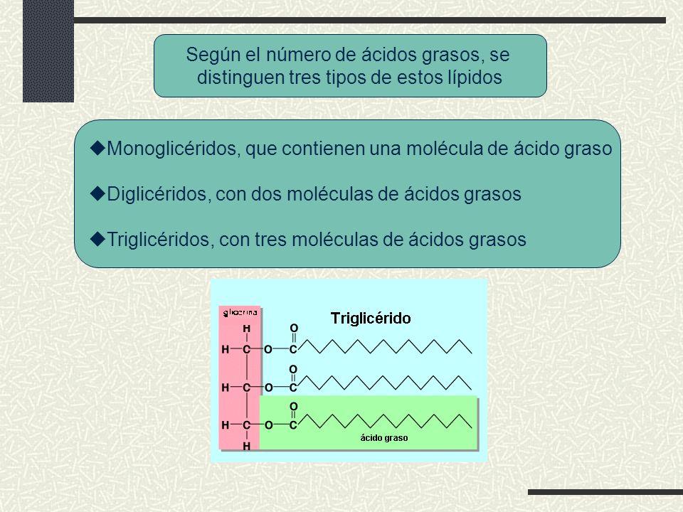 ÁCIDOS NUCLEICOS ADN Desoxirribosa Doble hélice A-T C-G ADN genómico ADN mitocondrial ARN Ribosa Cadena sencilla A-U C-G ARNm ARNt ARNr Nucleótidos Adenosin trifosfato Azúcar Base nitrogenada