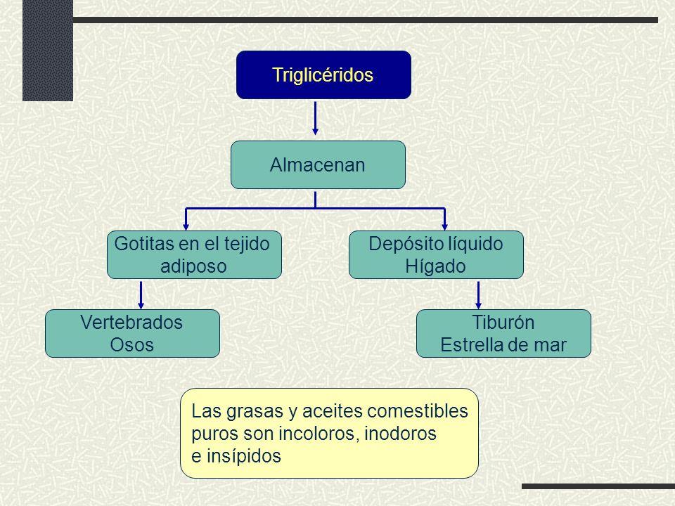 Enlace glucosídico Liberación de H 2 0