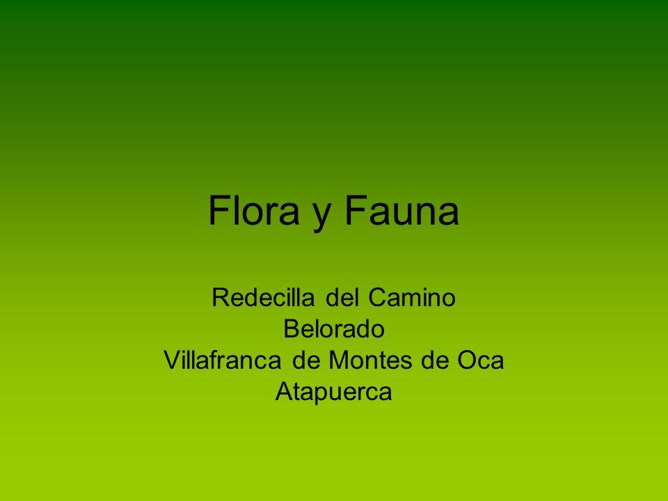 Flora y Fauna Redecilla del Camino Belorado Villafranca de Montes de Oca Atapuerca