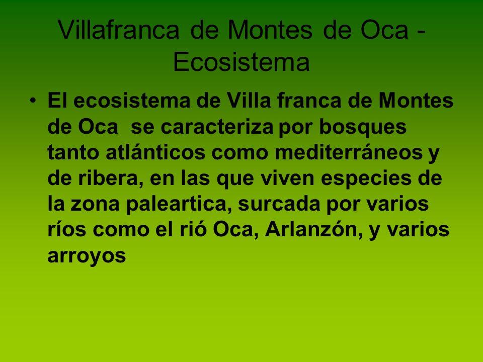 Villafranca de Montes de Oca - Ecosistema El ecosistema de Villa franca de Montes de Oca se caracteriza por bosques tanto atlánticos como mediterráneo