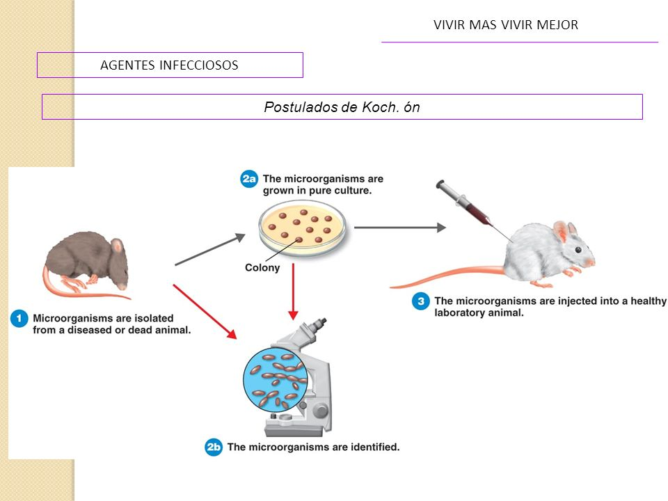 AGENTES INFECCIOSOS VIVIR MAS VIVIR MEJOR Postulados de Koch. ón