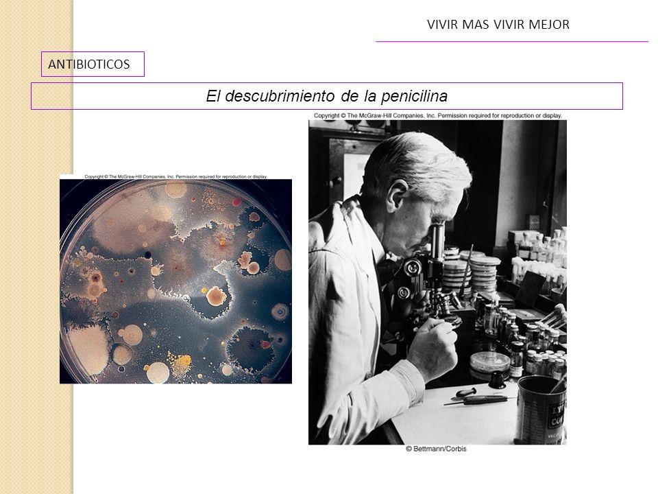 ANTIBIOTICOS VIVIR MAS VIVIR MEJOR El descubrimiento de la penicilina