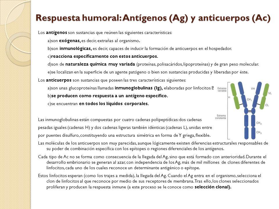 Los antígenos son sustancias que reúnen las siguientes características: a)son exógenas, es decir, extrañas al organismo. b)son inmunológicas, es decir