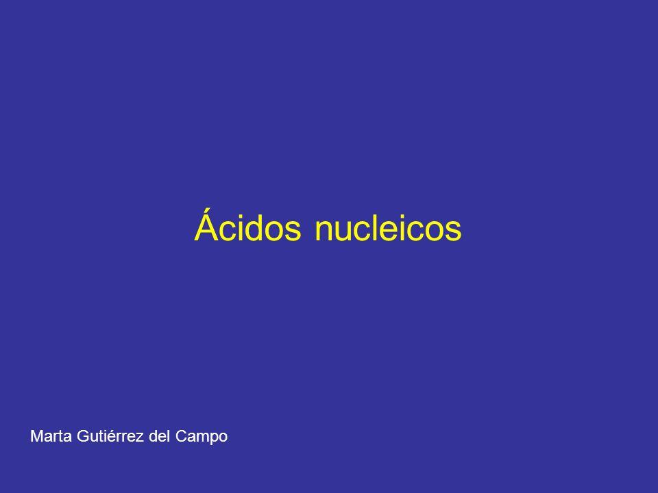 Ácidos nucleicos DNA (ácido desoxirribonucleico) RNA (ácido ribonucleico) - Ácido fosfórico - Pentosa (ribosa o desoxirribosa) - Bases nitrogenadas