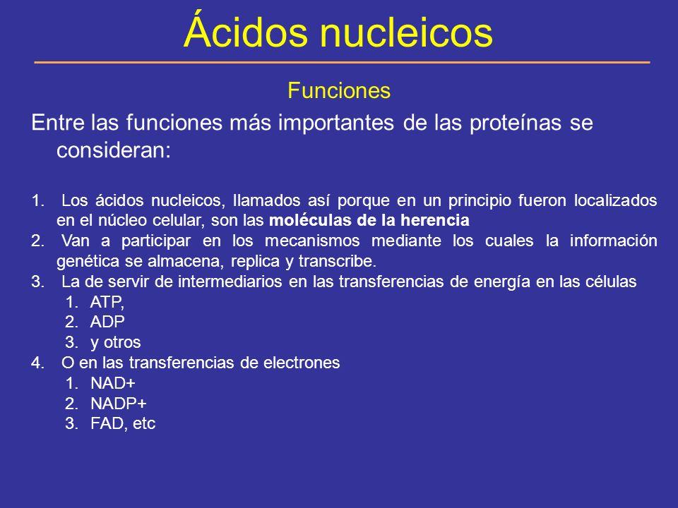 Ácidos Nucleicos ARN ADN Enlace fosfodiéster Nucleótidos Nucleósido Ac.