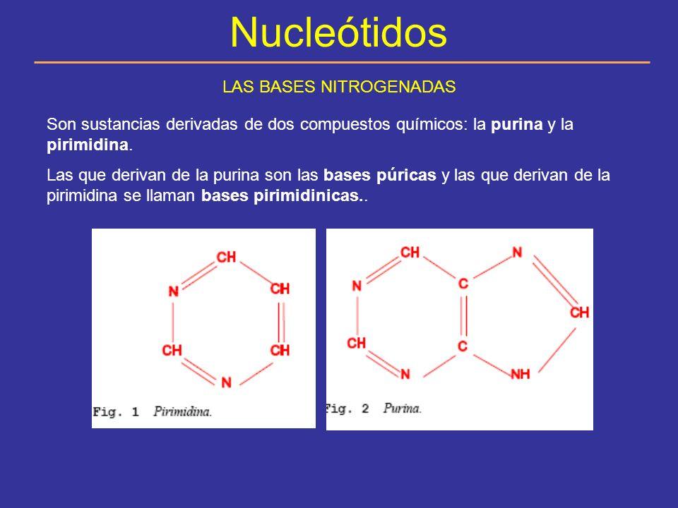 ARN Niveles estructurales Se pueden distinguir 3 niveles estructurales: Estructura primaria: La secuencia de los nucleótidos.