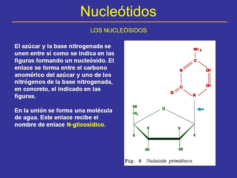 Nucleótidos ESTRUCTURA DE LOS NUCLEÓTIDOS Los nucleótidos son los monómeros que constituyen los ácidos nucleicos.