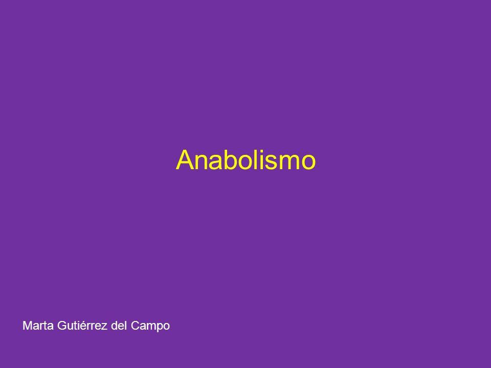 Anabolismo Marta Gutiérrez del Campo