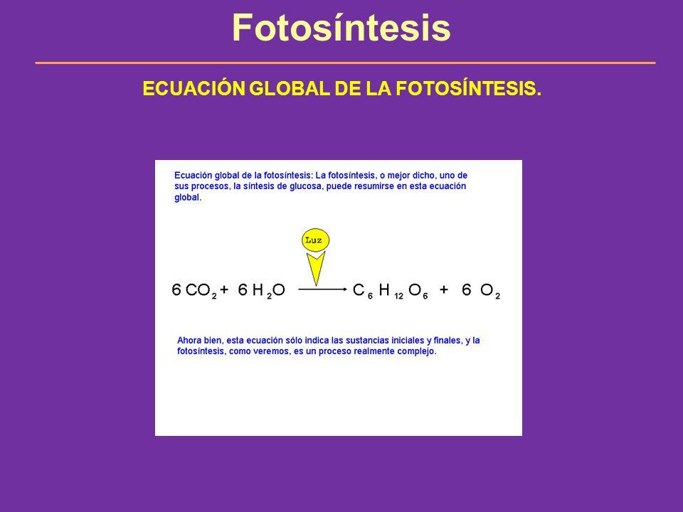 Fotosíntesis ECUACIÓN GLOBAL DE LA FOTOSÍNTESIS.