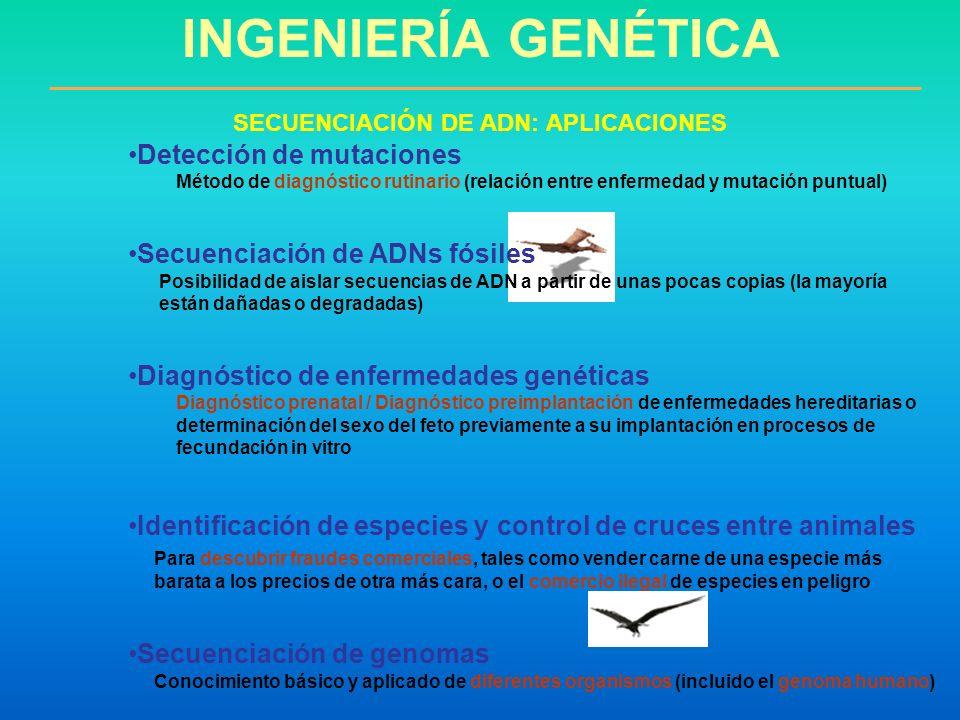 Detección de mutaciones Método de diagnóstico rutinario (relación entre enfermedad y mutación puntual) Secuenciación de ADNs fósiles Posibilidad de ai