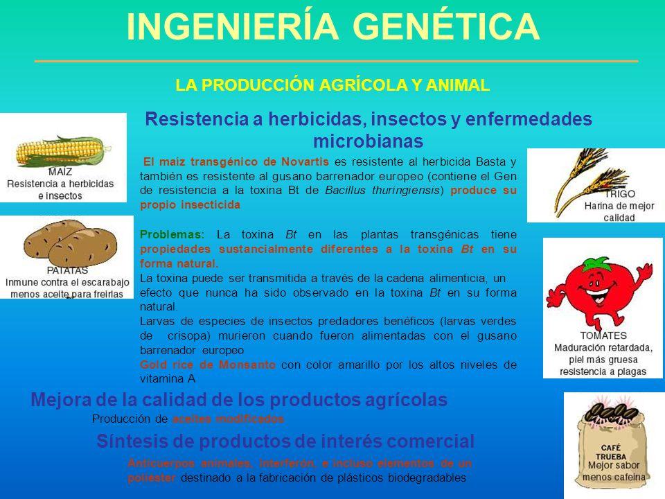 El maíz transgénico de Novartis es resistente al herbicida Basta y también es resistente al gusano barrenador europeo (contiene el Gen de resistencia