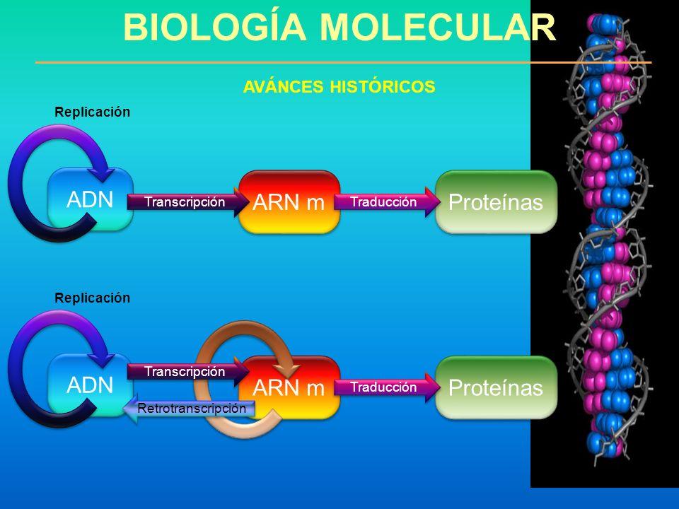 BIOLOGÍA MOLECULAR AVÁNCES HISTÓRICOS ADN Proteínas ARN m Transcripción Traducción Replicación ADN Proteínas ARN m Traducción Replicación Transcripció