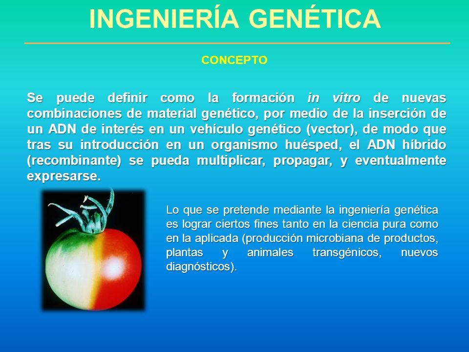 Se puede definir como la formación in vitro de nuevas combinaciones de material genético, por medio de la inserción de un ADN de interés en un vehícul