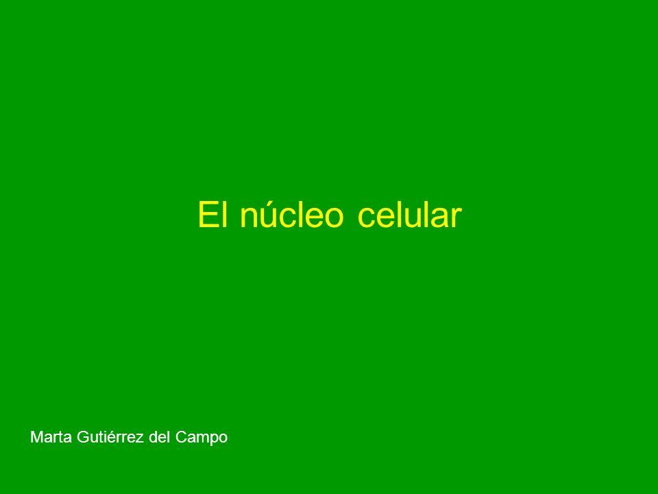 El núcleo en división TIPOS DE CROMOSOMAS Orgánulos constantes en número, forma y características.