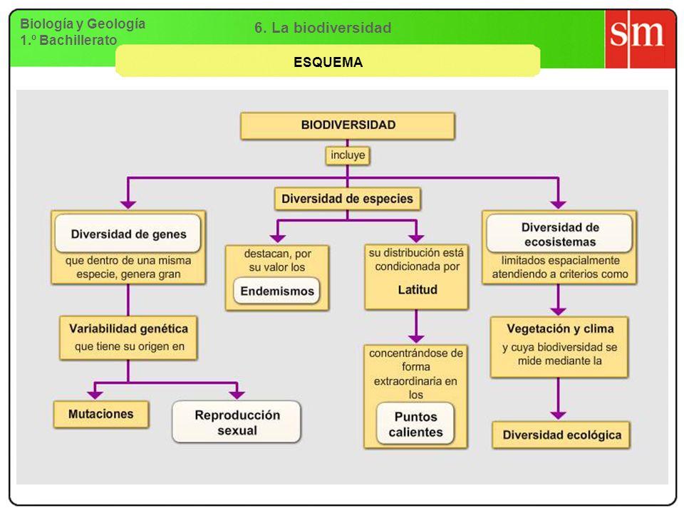 Biología y Geología 1.º Bachillerato 6. La biodiversidad ESQUEMA