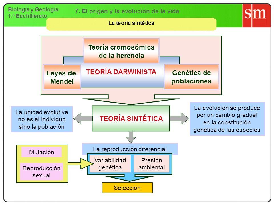 Biología y Geología 1.º Bachillerato 7. El origen y la evolución de la vida La teoría sintética La reproducción diferencial TEORÍA DARWINISTA Leyes de