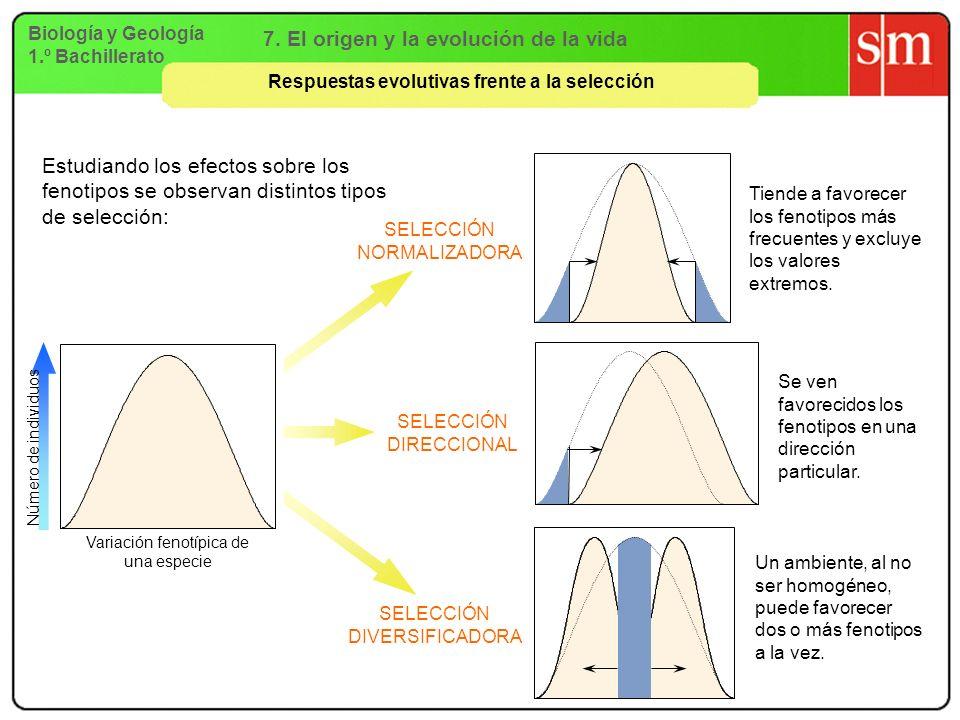 Biología y Geología 1.º Bachillerato 7. El origen y la evolución de la vida Respuestas evolutivas frente a la selección SELECCIÓN NORMALIZADORA SELECC