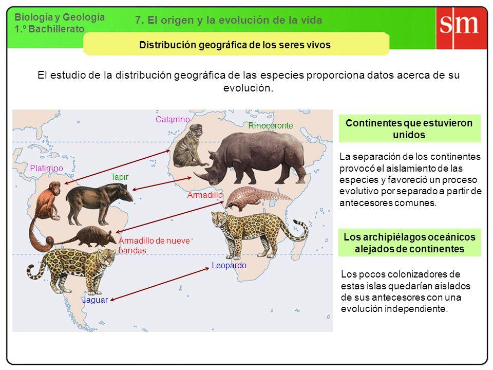 Biología y Geología 1.º Bachillerato 7. El origen y la evolución de la vida Distribución geográfica de los seres vivos Continentes que estuvieron unid