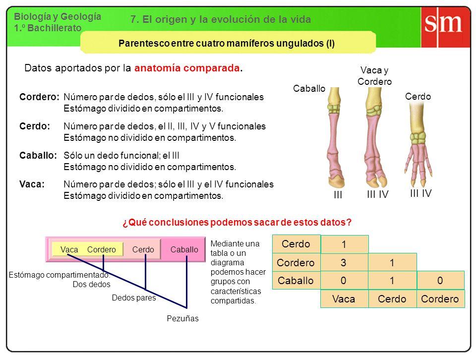 Biología y Geología 1.º Bachillerato 7. El origen y la evolución de la vida Parentesco entre cuatro mamíferos ungulados (I) Datos aportados por la ana