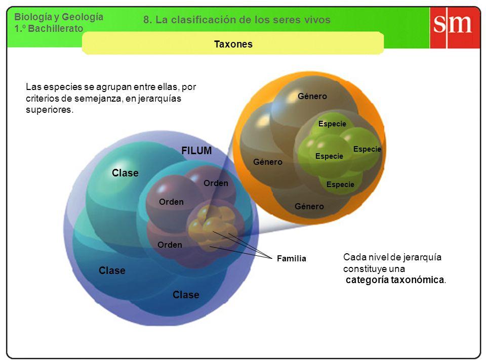 Biología y Geología 1.º Bachillerato Taxones Especie Género Orden Familia Clase FILUM Cada nivel de jerarquía constituye una categoría taxonómica. Las