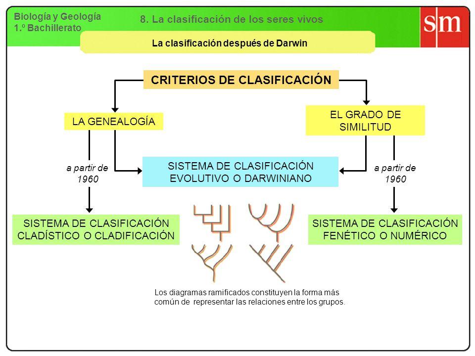 Biología y Geología 1.º Bachillerato La clasificación después de Darwin 8. La clasificación de los seres vivos CRITERIOS DE CLASIFICACIÓN SISTEMA DE C