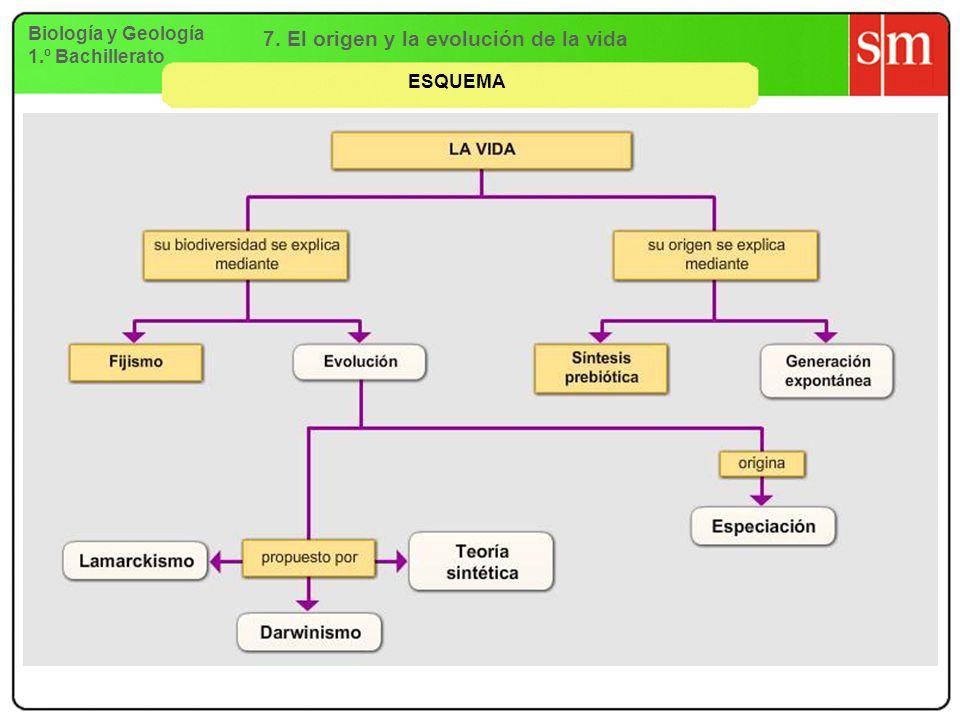 Biología y Geología 1.º Bachillerato 7. El origen y la evolución de la vida ESQUEMA